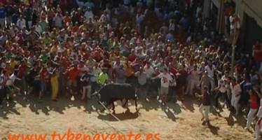 BASES DEL CONCURSO DEL CARTEL DEL TORO ENMAROMADO DE BENAVENTE 2014