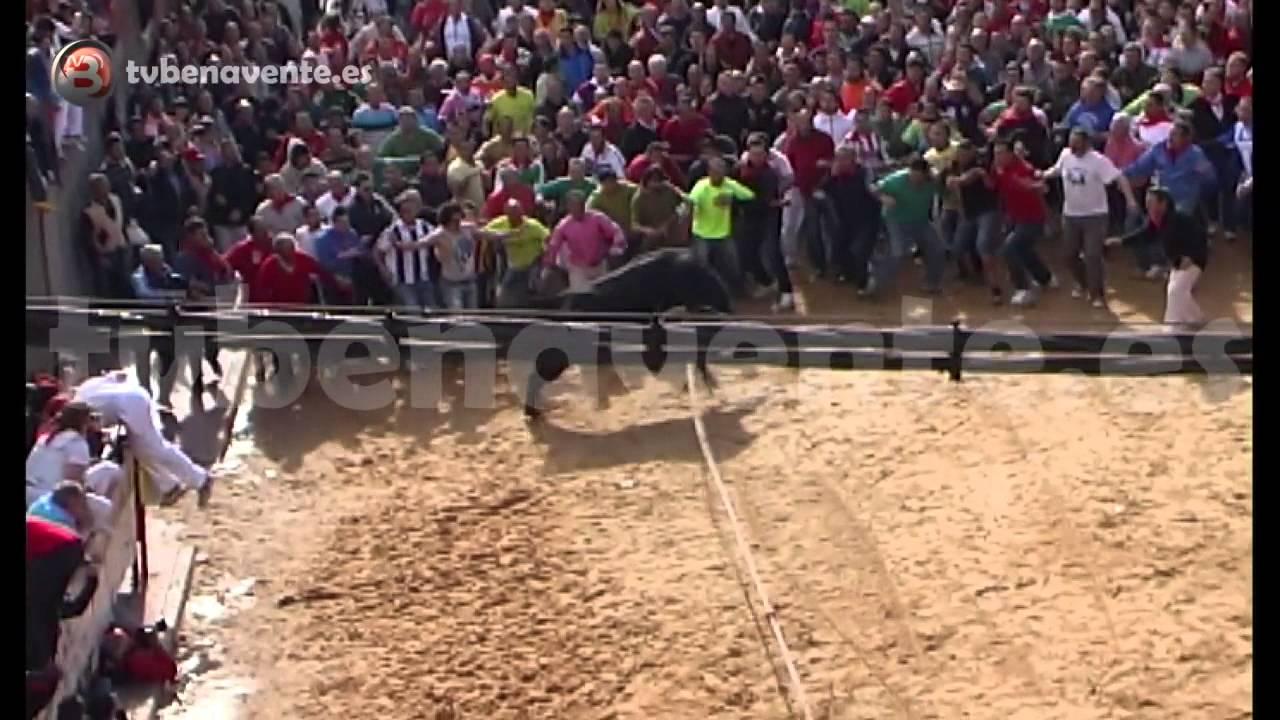 Video salida del toril de cortador toro enmaromado 2013 benavente - Altos del toril ...