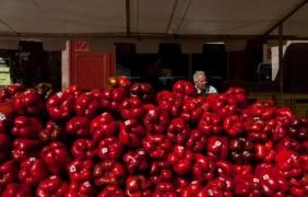 Actividades del Ayuntamiento de Benavente con motivo de la XXI Feria del Pimiento