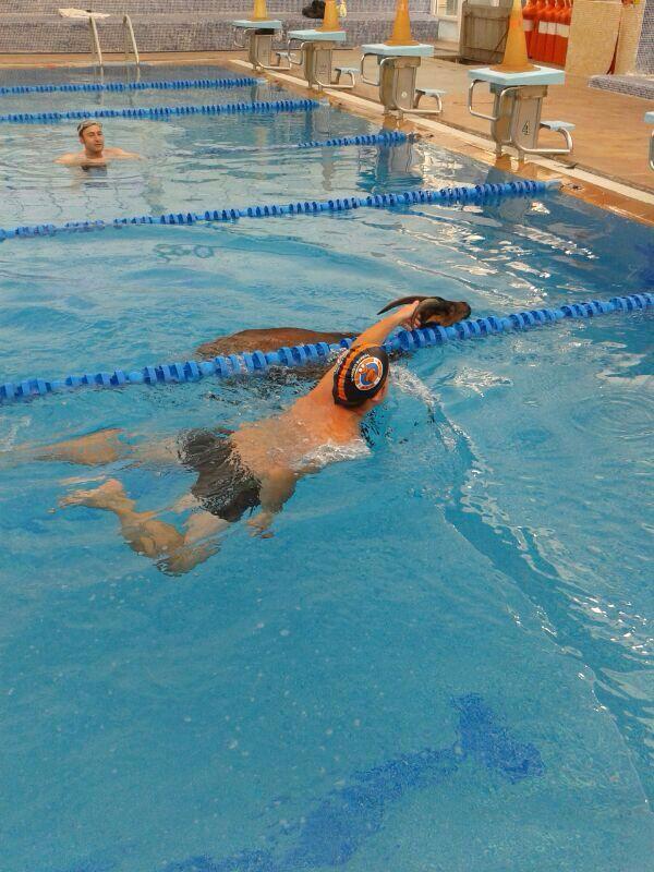 Se cuela una cabra en la piscina climatizada de benavente for Piscinas benavente