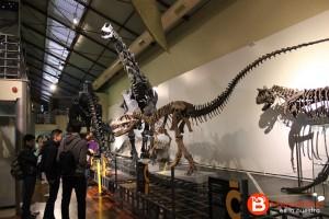 Réplicas de esqueletos de dinosaurios