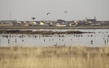 Las Lagunas de Villafáfila cuentan ahora con más de 10.000 aves