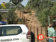 La Guardia Civil halla 8 jabalíes que se encontraban encerrados en una nave