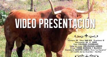 VIDEO: Presentación de Quite, TORO ENMAROMADO 2015 DE BENAVENTE