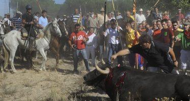 La Junta de Castilla y León rechaza el permiso administrativo para celebrar el Toro de la Vega