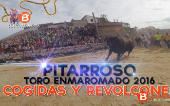 VIDEO: Cogidas y Revolcones de Pitarroso, Toro Enmaromado 2016 de Benavente