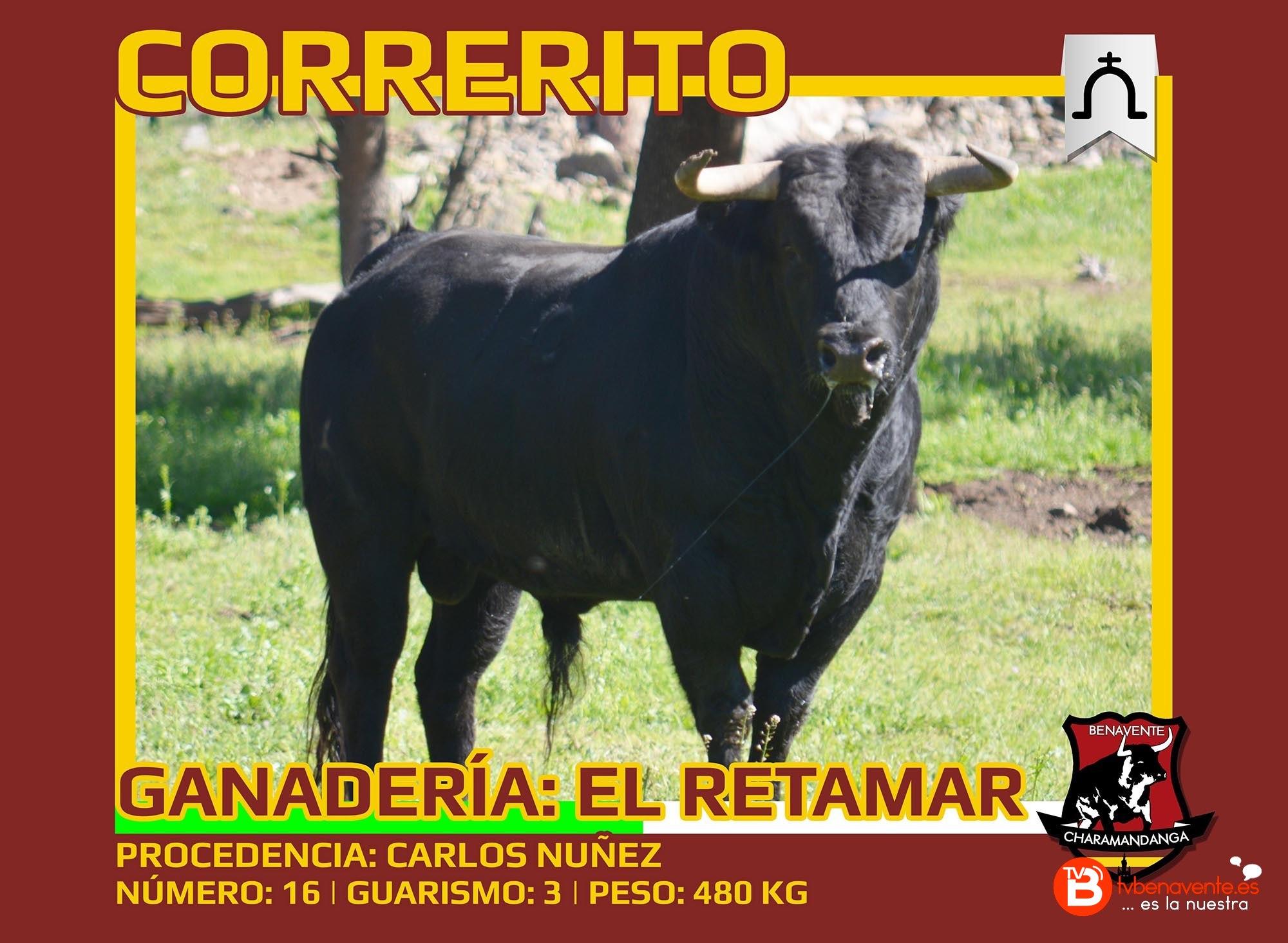 Toros Condes Duque Benavente 2016 - Correrito - Charamandanga