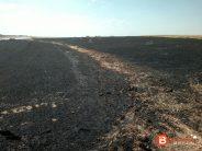 Un incendio arrasa casi cuatro hectáreas de cereal en Matilla de Arzón