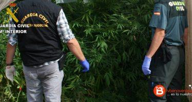 Detenido el supuesto responsable del cultivo de marihuana en Pueblica