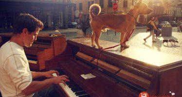 Dejó su trabajo, se compró un piano y viaja alrededor del mundo tocando música junto a su perro