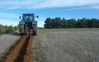 Ayudas de 2 millones de euros para la forestación de tierras agrícolas