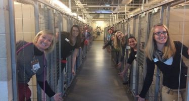 Un refugio para perros logra encontrar hogar para todos los animales