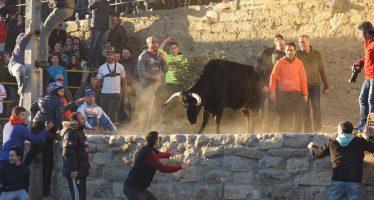 GALERÍA: Toro de cajón en honor a San Antón en Castrogonzalo