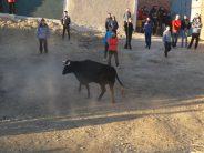 Los festejos taurinos en la provincia de Zamora reciben 172 denuncias