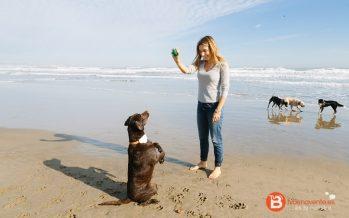 Innovador geolocalizador de mascotas que cuida de su salud y adiestra con ultrasonidos