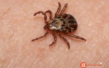Sanidad ha detectado garrapatas asociadas a la fiebre hemorrágica de Crimea-Congo