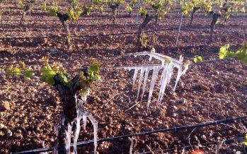 UCCL exige que Castilla y León sea declarada zona catastrófica por la extrema sequía