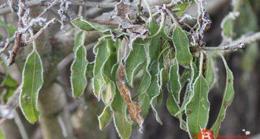 Sanabria registra la quinta temperatura más baja del país con -2,8 grados