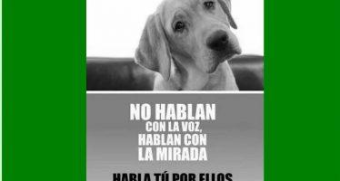 V Paseo solidario contra el abandono animal el 11 de junio en Benavente