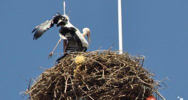 Los vecinos de Santa Colomba denuncian el sufrimiento de una cigüeña