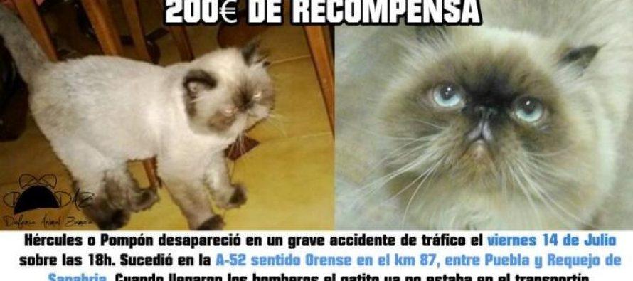Recompensan con 200 euros si localizan al gato desparecido en la A-52