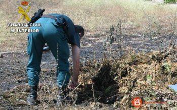 Investigado como supuesto autor de un delito de incendio forestal en Toro