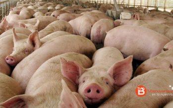 Los vecinos de Villafáfila se oponen a la macrogranja de porcino